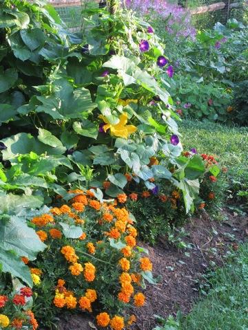 """<a href=""""/content/garden-flowers"""">Garden Flowers</a>"""