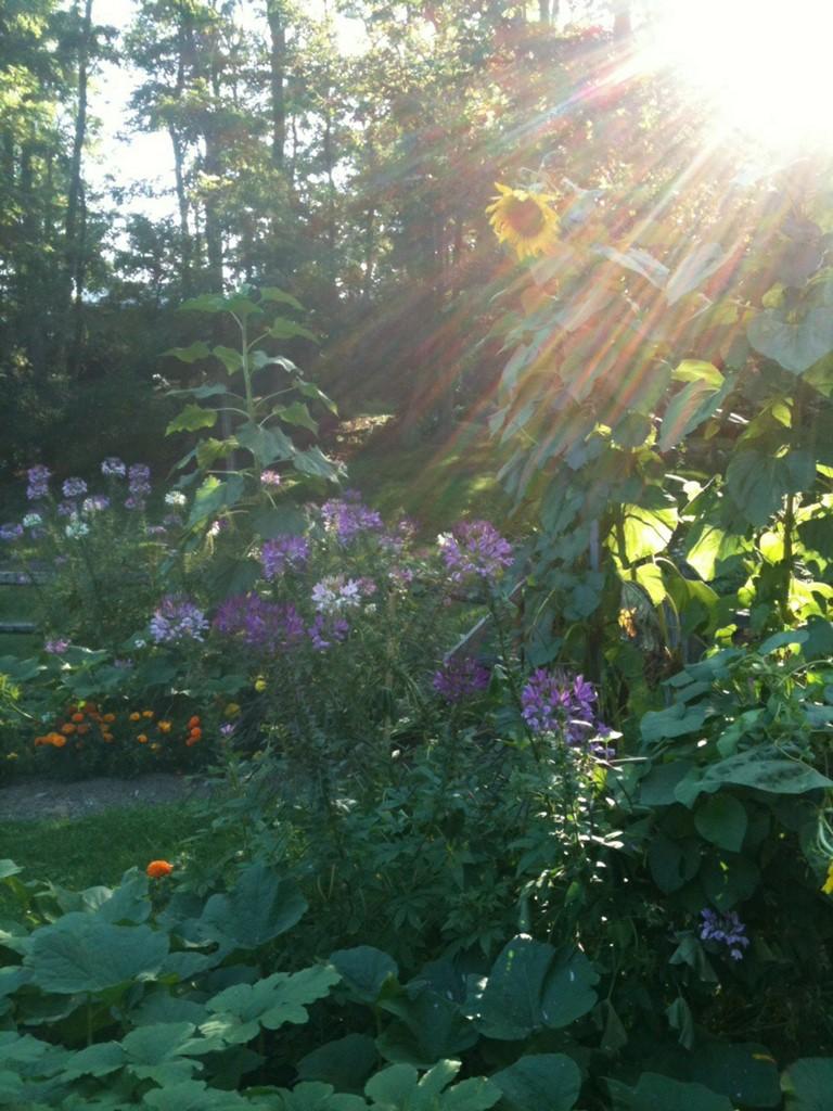 """<a href=""""/content/garden-light"""">garden light!</a>"""