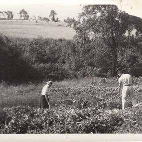 Garden & open farm fields